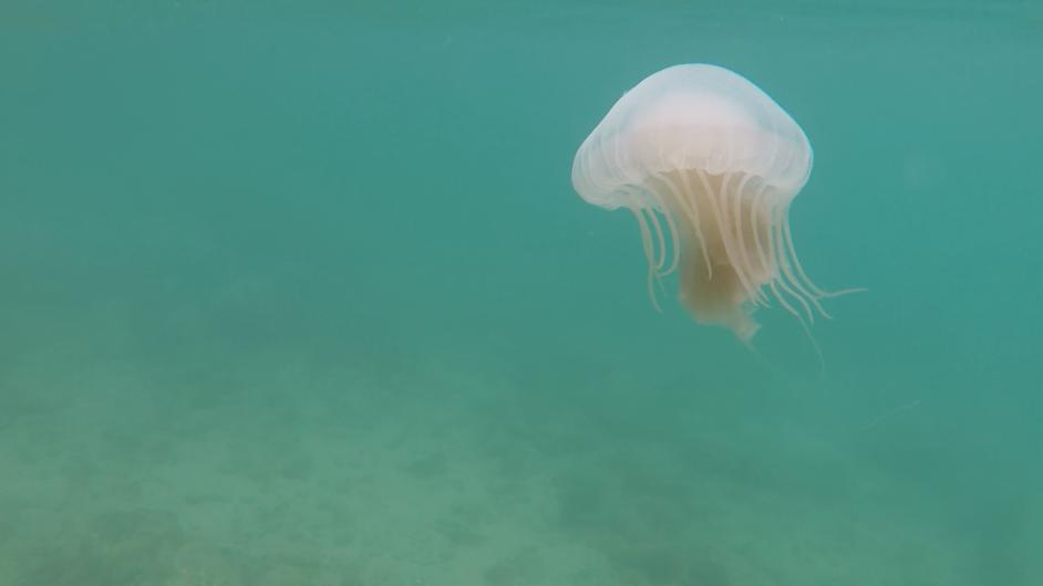 Água-viva Búzios GoPro 5