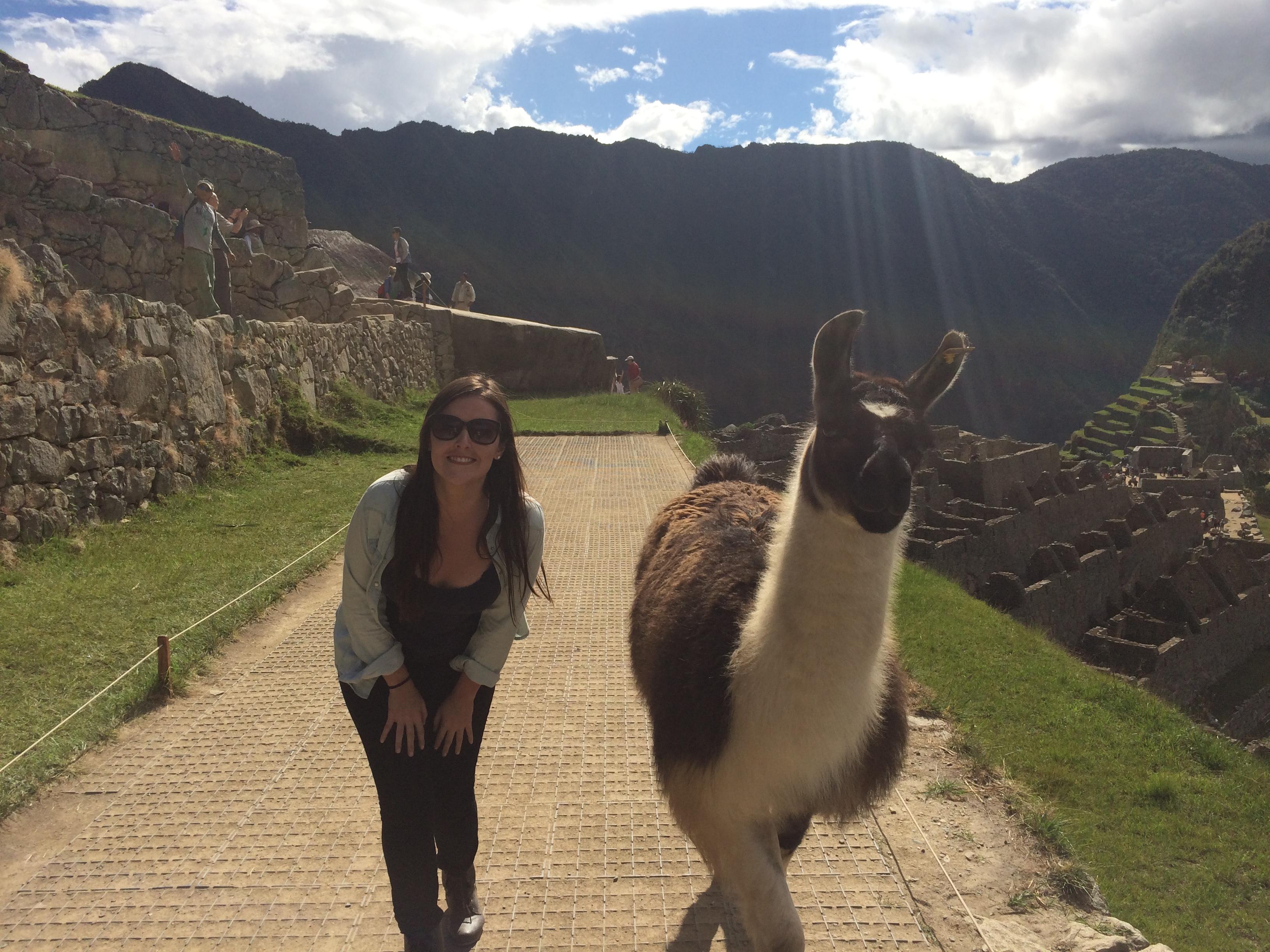 Lhama Machu Picchu Peru