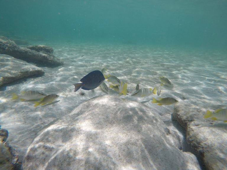 Snorkeling em Rocky Cay San Andrés
